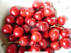 Common cherry