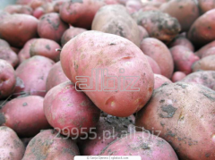 Ziemniak świeży