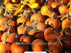 Feed pumpkin