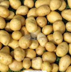 Technical potato