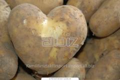 Universal potato