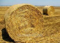 Древесные пеллеты, брикеты из биомассы, экспорт