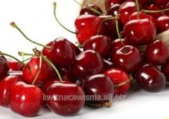 Czereśnia 'Karesova' Prunus avium 'Karesova'  na podkładce Antypki