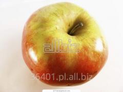 Apples Cortlandt