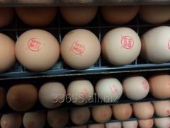 Chicken incubative eggs