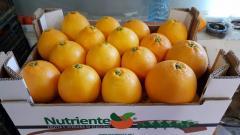 Pomarańcze Włochy Calabria