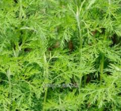 Tarragon herb xmas tree, Abrotani Herba