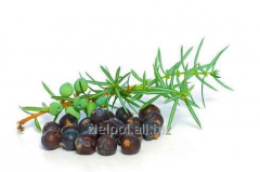 Juniper fruit, juniperi fructus