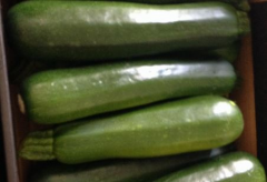 High quality zucchini without flaws.