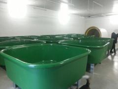 Pool for fish farming
