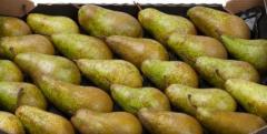 Frozen pears