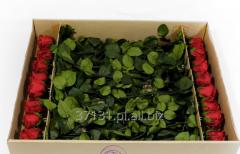 Stabilizowane róże zachowujące świeżość i piękno przez 2 lata.