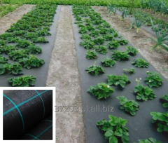 Agrotkanina czarna 100 gr/m2 rolka 1.5 x100 m