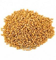 Semillas de mostaza