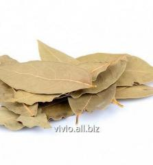 Bay leaves, dried whole
