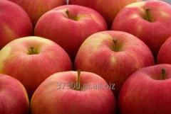 Jabłka idared, przechowują się dobrze i długo.