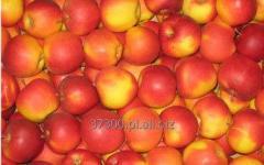 Jabłka Champion, charakteryzujące się słodkim,