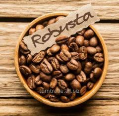 Robusta of coffee beans