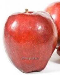 Jabłka Rubinstar 70+/ 13 kg