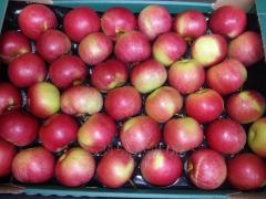 Jabłka - Idared