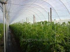 Tunel foliowy szpalerowy dla upraw wymagających podpór - ogórków, pomidorów, papryki oraz dla upraw szkółkarskich.