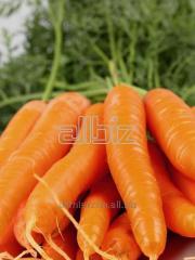 Φρέσκα καρότα