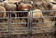 Panele ogrodzeniowe dla owiec