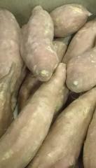 Ziemniak słodki boniato