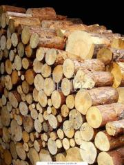 Raw wood material for production-engineering needs