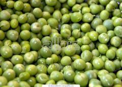 Pea fodder