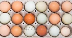 Drukarka do znakowania jaj - znakowanie jaj