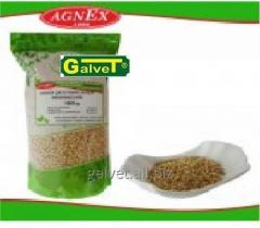 Groat, buckwheat