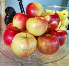 Jabłka naturalne
