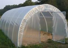 Greenhouses under polycarbonate