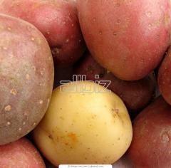 Ziemniaki odmianowe