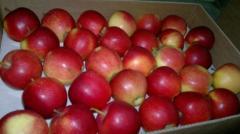 Jabłka Starkimson