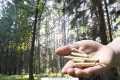 Pellet z drzew iglastych i liściastych.