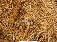 Sprzedajemy słomę do produkcji biopaliwa.
