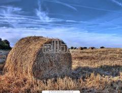 Sprzedajemy siano do produkcji biopaliwa.
