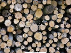 Drewno opałowe do kominków.