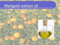 Ekstrakt oleju z nagietka (Marigold)