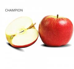 Champion is tasty and juicy, sweet-wine apples