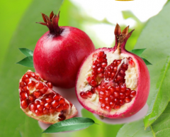 Sale of domestic fruit (apples, plums, pears) and
