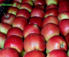 Polskie jabłka - tylko eksport