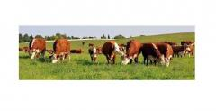 EkoPrat Vega 70 Białko 68-70% dwa gatunki...
