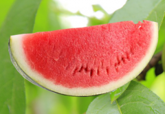 Watermelons imported from Egypt, Spain and Greece;