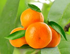 Słodkie i soczyste owoce sprowadzane z Egiptu, Grecji i Hiszpanii, korzystne warunki.