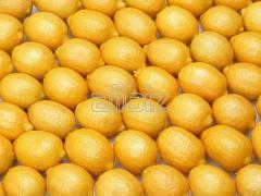 Fresh, juicy and firm lemons.