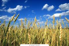 Complex fertilizers