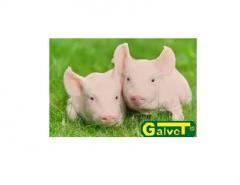 FARMVIT - 2,5% TURBO MAX MPU dla warchlaków i tuczników od 15kg - TONA